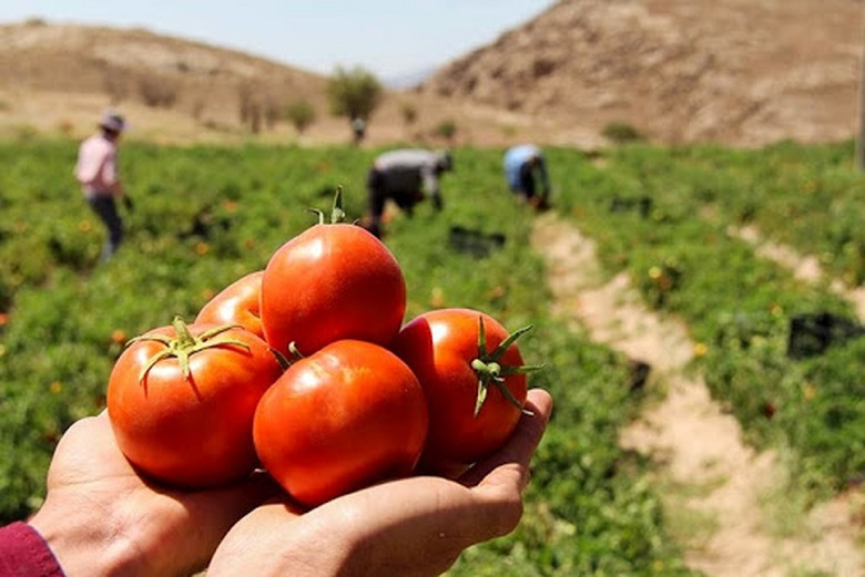 مانع گذاری یا رفع موانع کشاورزی؟