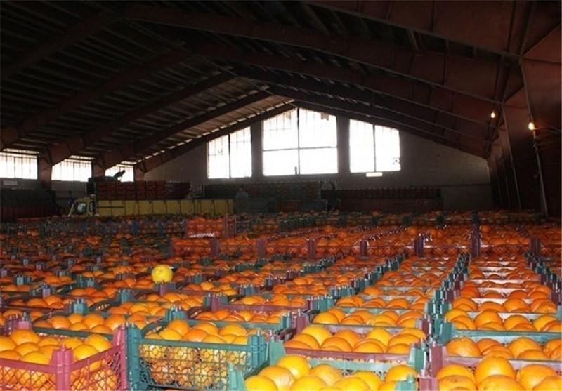 افزایش ۲۰ درصدی قیمت میوه نسبت به ماه گذشته